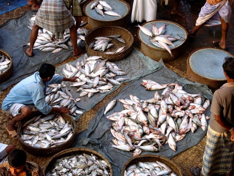 Bengal's proverbial open-air fish market.