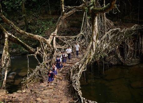 treerootbridge